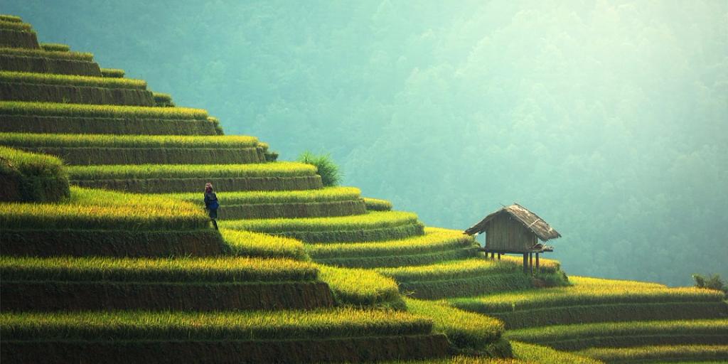 rice-terraces-china